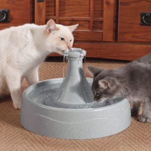 kitty cat drinking fountain